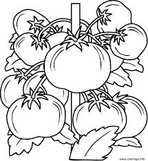 Coloriage Tomate Fruit Legume Dessin