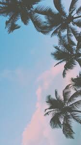 palm trees tumblr. Iphone Wallpaper Swag Tumblr 39 And Hipster Palm Trees