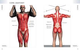 Anatomy Of Exercise A Trainers Inside Guide To Your