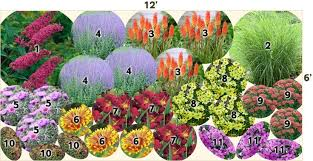 Small Picture Garden Design Garden Design with All About Perennial Plants Great