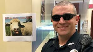 Sheep Who Evaded Mansfield Police Returns To Rodeo – CBS Boston
