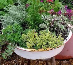 12 herb green inspiration ideas herb