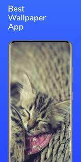 Cats Wallpaper HD for Android - APK ...