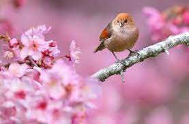 Birds And Flowers Hd - 1920x1263 ...