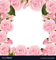 pink rose flower frame border vector image