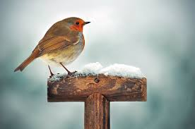 Image result for robin in a garden