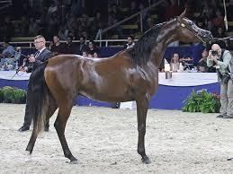 From Betty Finke | Arabian Horse World