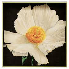 Rock Paper Flower Trays Rock Flower Paper Matillija Poppy 15 Inch Square Tray 51 You Save