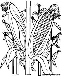 Small Picture Printable vegetables Corn coloring page Printable Coloring Pages