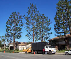 for more information or to request a quote from robu0027s tree service of orange county call 714 6676126 today robs tree service f74