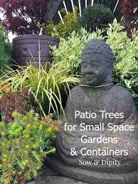 patio trees for small space gardens