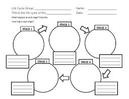 Life Cycle Chart Template Life Cycle Diagram Template