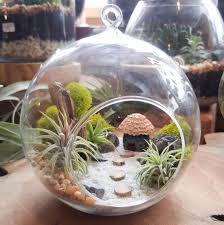 air plant terrarium kit by midnight blossom diy miniature landscape featuring a handmade hut