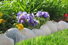clam s line a flower garden near the