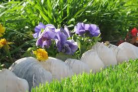 clam s line a flower garden near the