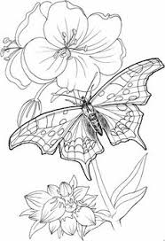 Small Picture lilies flowers to color Lily Flower Coloring Pages Flower