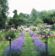 Small Picture Best 25 Standard roses ideas on Pinterest Lavender bush Front