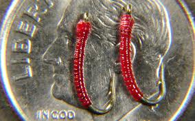 Midge Fly Patterns Adorable BLOOD MIDGE LARVA FLY PATTERN [VIDEO] Toflyfish