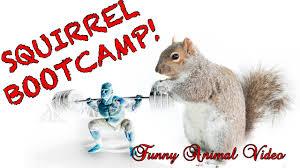 Funny Animal Workout Motivation Video Wildlife Wednesday