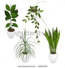 office flower pots. Set Of Potted Indoor, Office And House Plants. Collection 3d Flower Pots With O