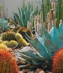 best 25 outdoor cactus garden ideas on cactus garden module 7 outdoor garden cactus