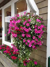 Small Picture 675 best Hanging Baskets images on Pinterest Hanging baskets
