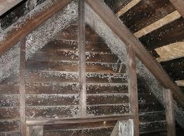 mold in attic. Contemporary Attic Finding Black Mold In Attic Hereu0027s How To Remove It Intended In Attic 0