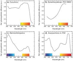 Action Spectrum Action Spectra Of Photosynthesis In A Cucumber Leaves B
