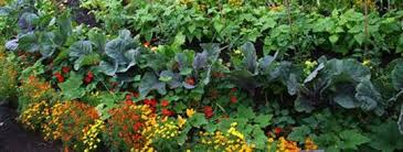 In Partnership With The Earth: Biodynamic Gardening  InnerSelf.com