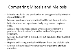 Venn Diagram Comparing Meiosis And Mitosis Comparing Mitosis And Meiosis Venn Diagram Magdalene
