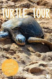 Oahus Epic North Shore Turtle Tour Explore Shaw