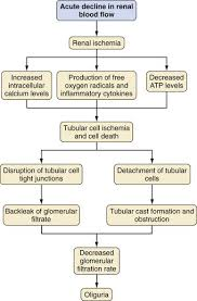 Essentials Of Nephrology Clinical Gate
