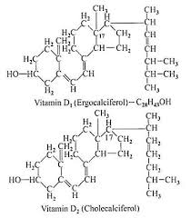 essay on vitamin d top essays nutrition living organisms essay 3 synthesis of vitamin d