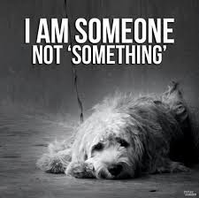 Animal Abuse Quotes