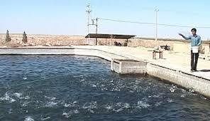 Image result for پرورش ماهی قزل در چوپانان