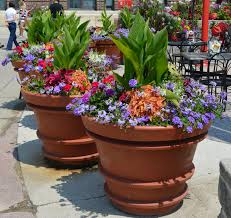 Small Picture large containers summer annuals full sun repetition of design