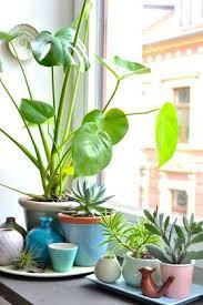 indoor gardening. Küchengrün Von Wunderkammer · Indoor GardeningIndoor Gardening