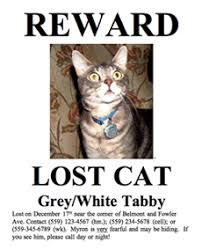Lost Cat Flyer Lost Cat Sign Magdalene Project Org