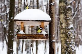 Diy Ihr V Gelein Kommet Vogelfutterhaus Selber Bauen Zuhause