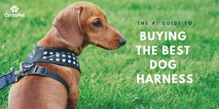Rabbitgoo Dog Harness Size Chart The 1 Guide To Buying The Best Dog Harness Certapet