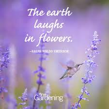 Purple Flower Quotes Ten Of The Best Spring Quotes Finegardening