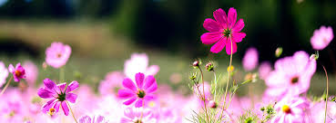 beautiful flowers cover photos for facebook timeline for girls.  Timeline With Beautiful Flowers Cover Photos For Facebook Timeline Girls F