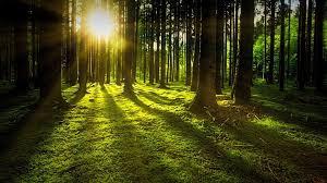 自然 フォレスト 太陽 - Pixabayの無料写真