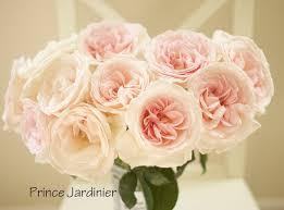 florabun prince jardinier large pale blush pink garden rose