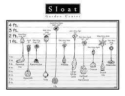 Flowering Bulbs Chart Planting Depth Guide Height Info