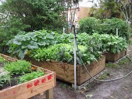 Summer Vegetable Gardens In Florida