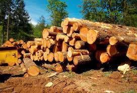 Обработка древесины и изделия из неё значение разных пород дерева  Заготовка древесины