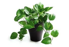 Small plant for office desk Office Workstation Full Size Of Best Office Desk Plants Australia Ideas Singapore Plant The To Breathe New Life Fininstructor Cool Office Desk Plants Philippines Australia Small For Online India