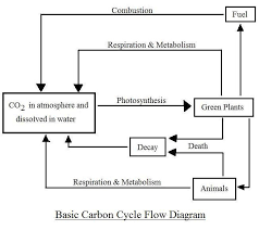 Simple Carbon Cycle Diagram Carbon Cycle Science Room