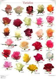 Variety Of Roses Rose Varieties Flowers Types Of Flowers